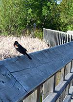 Bird perched on bridge railing