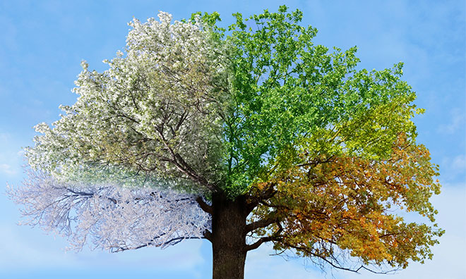 Illustration of tree going through all four seasons