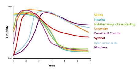 graph on toddler brain