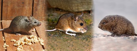 Rodents | Strathcona County