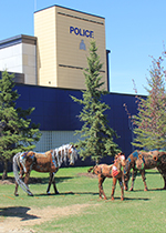 Horse sculptures in front of RCMP building