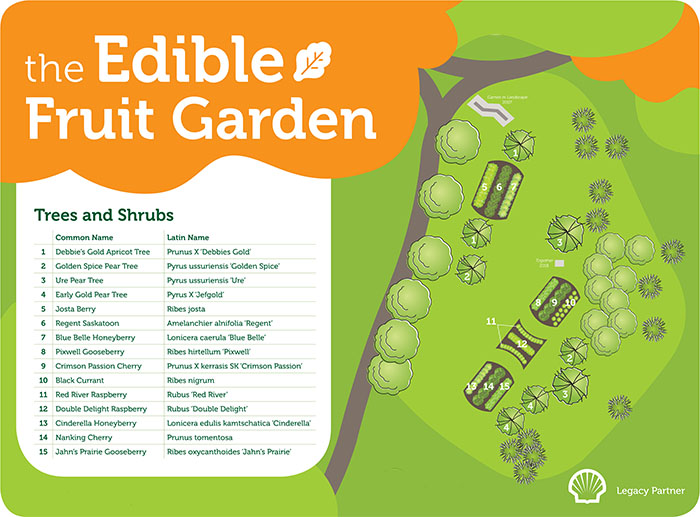 An illustrated map of an edible fruit garden.