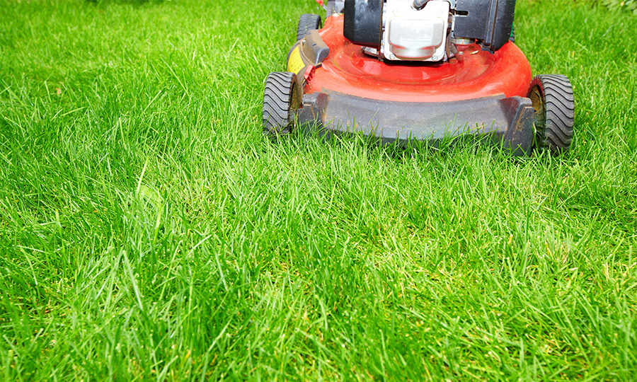 Lawn Care Tips - Lawn Care Tips Strathcona County