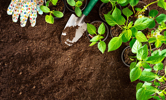 image of gardening gloves, plants and tools on top of dirt.