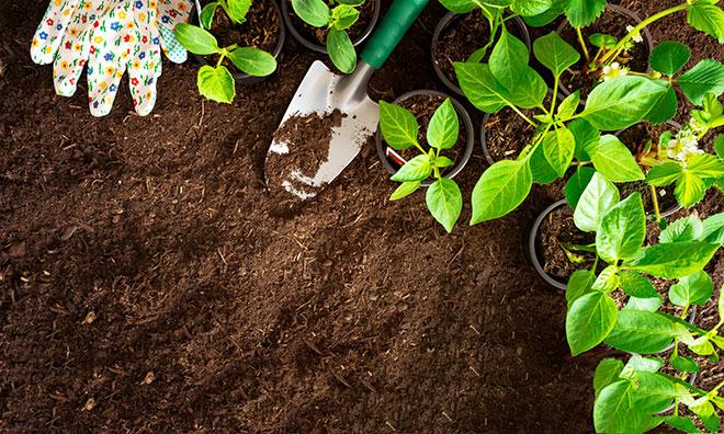 Grow Your Garden: A Vegetable Gardening Education Series