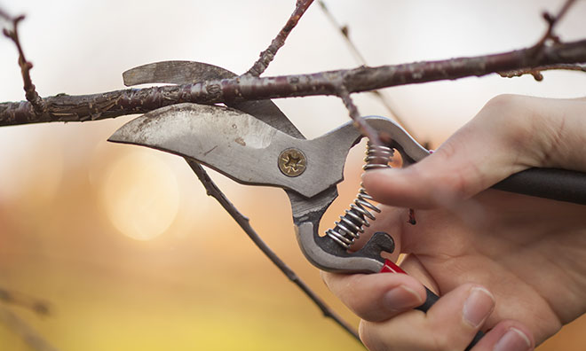 hand holding tree trimming tool in the act of clipping a branch