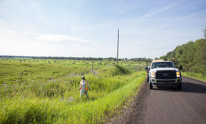 County workers spraying herbicide in a roadside ditch.