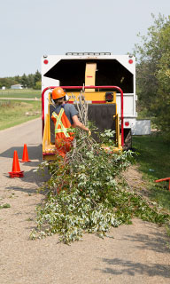 Image of County staff member putting tree brush in a chipper machine.