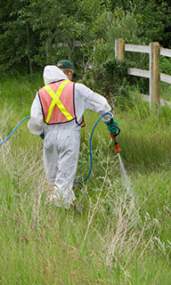County worker spraying herbicide in the ditch.