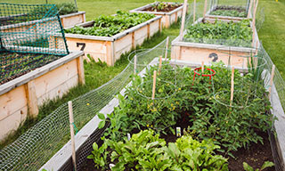 Image showing garden boxes in a community garden
