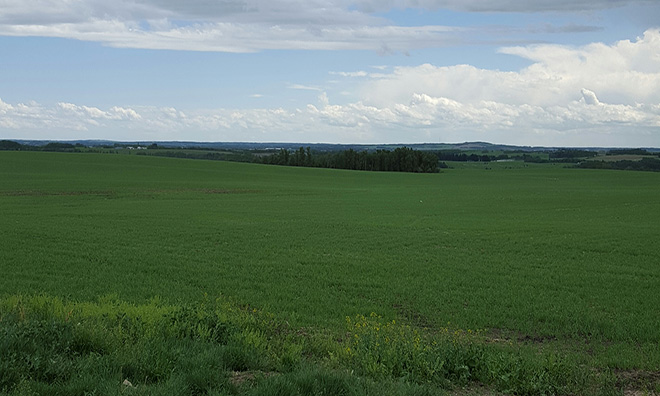 Image of a green field of grass outside Penhold.